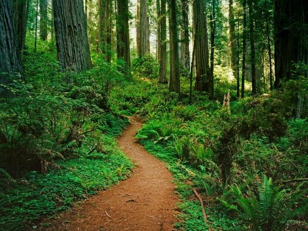 Jungle-Path-2-600x450