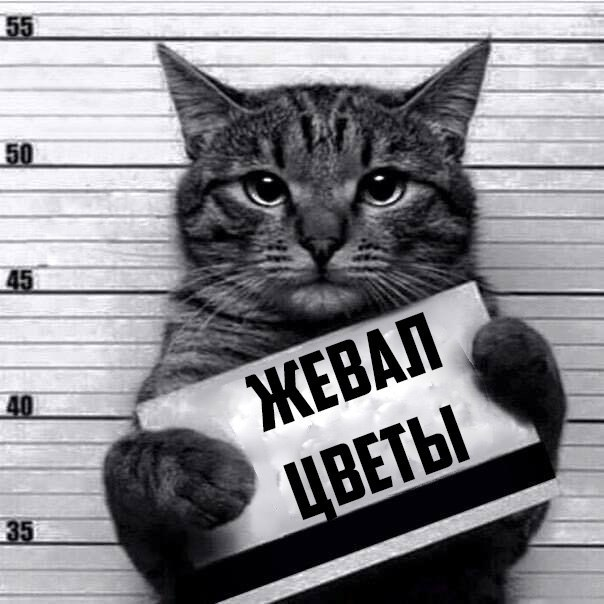 005-ellf.ru