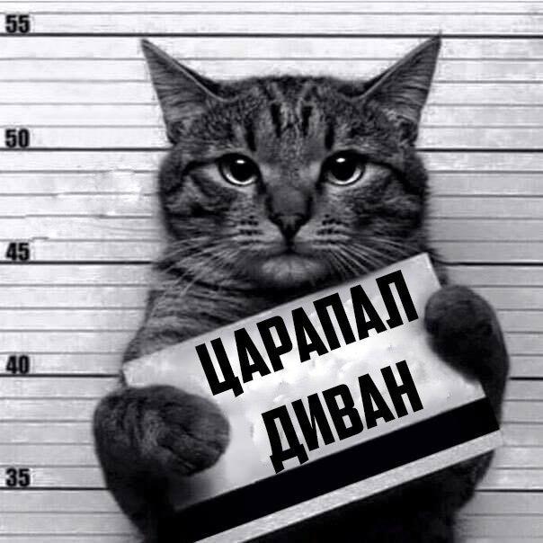 007-ellf.ru